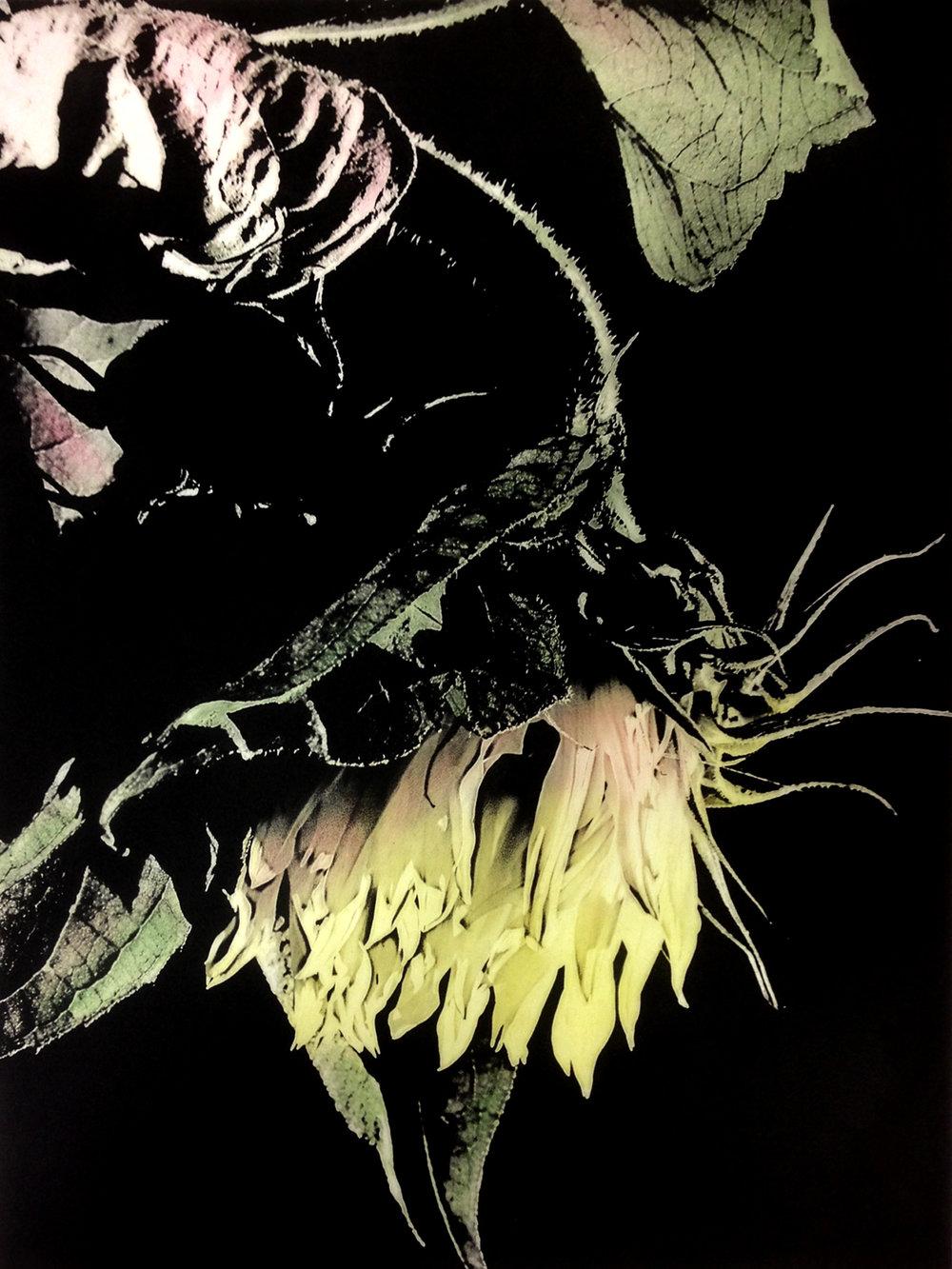 Heerschop_Sunflower I EV.jpg