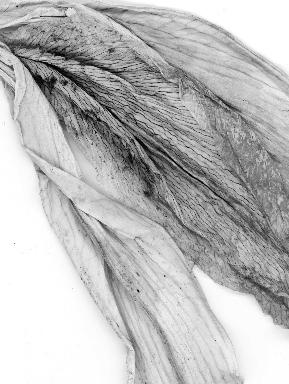 Dried Petal