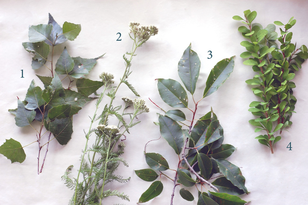foraged dye plants