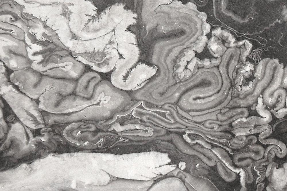 suminagashi: detail by natalie stopka