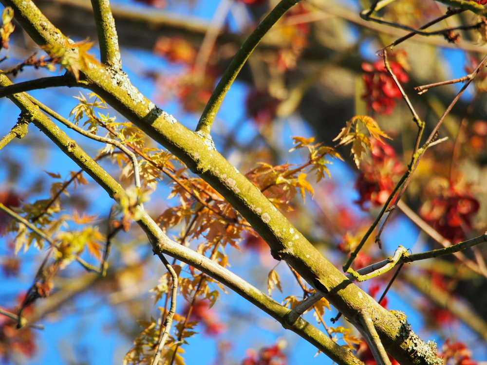 Trees and their branches can seem overwhelming but with some expert advice and training, you can soon feel confident in taking pruners or a hand saw to your own trees and shrubs.