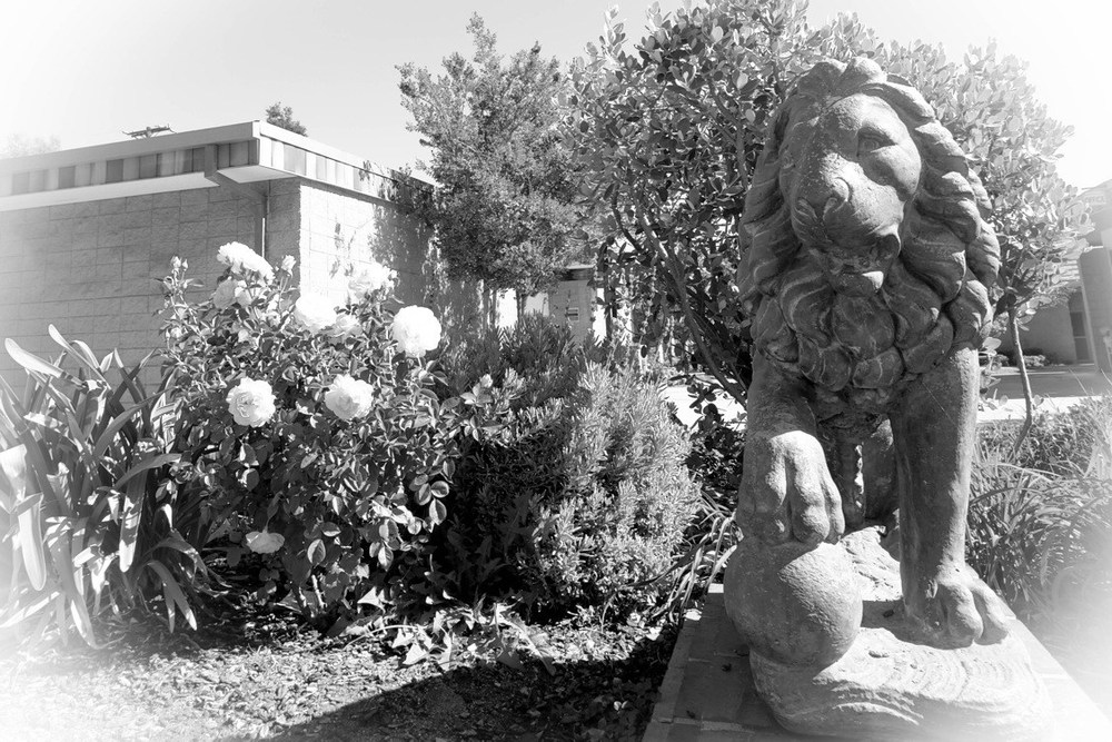 lion statue at front of school