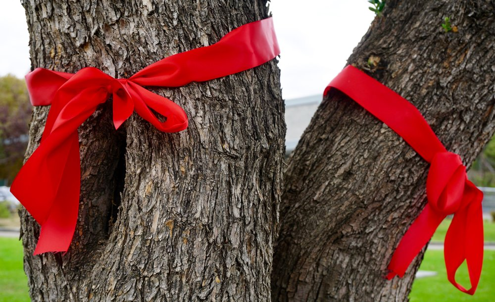 Red ribbons tied around two trees during red ribbon week.