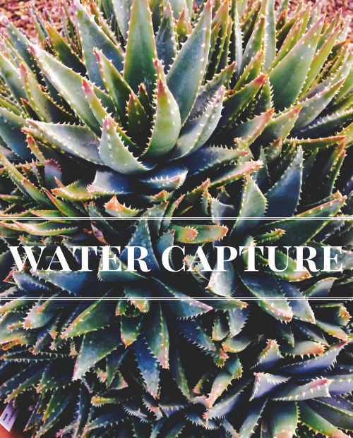 Water capture