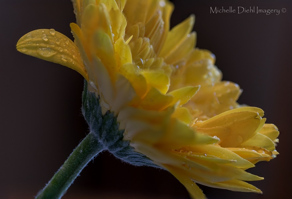 Click image to purchase print from Michelle Diehl Imagery at Zazzle.com