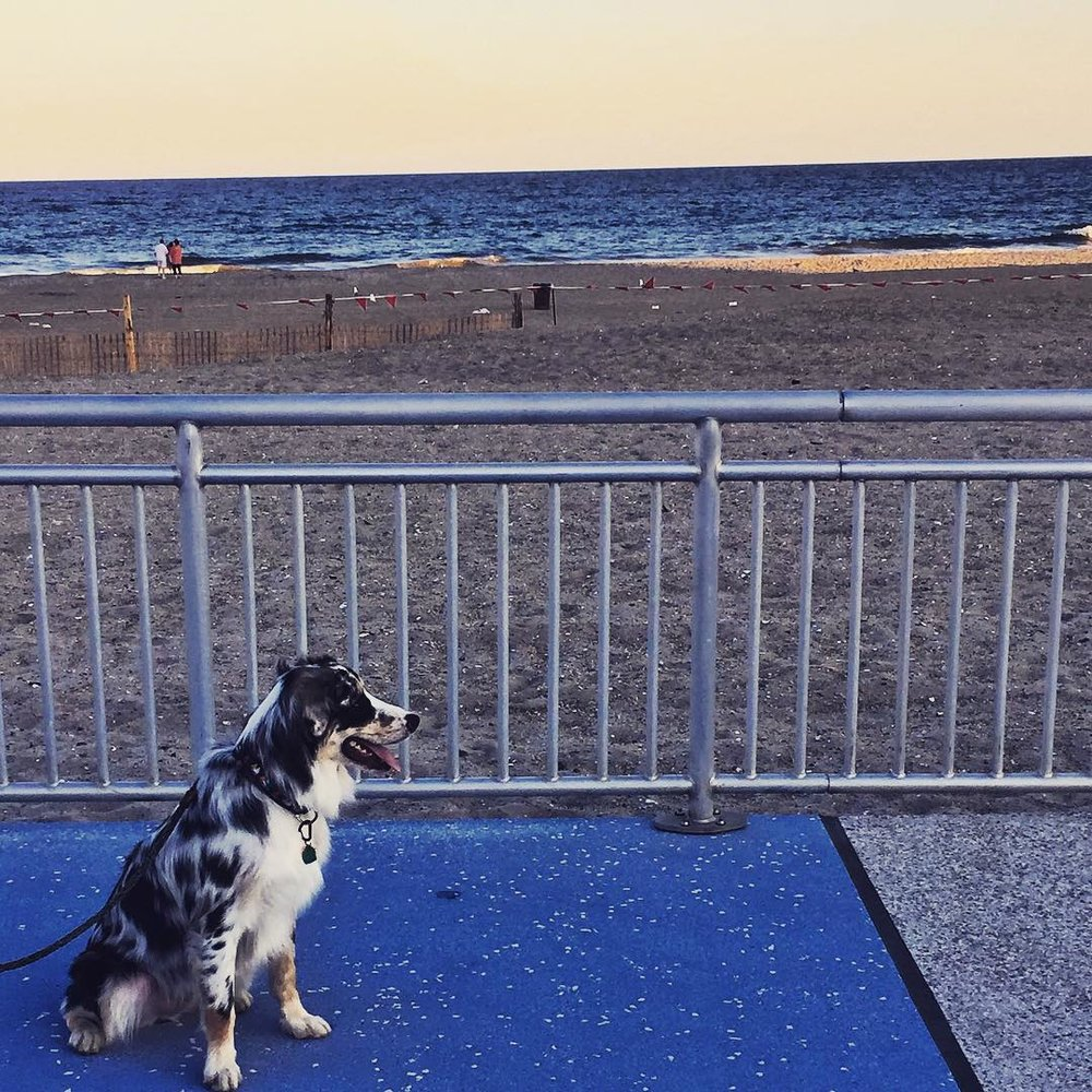 Day 76/100: Finley taking in the view at 106th street. #rockaway #rbny #rockawaybeach #rockawaybeachny #findog #heartofqueens #queenscapes #100DaysOfQueens #puppynephew via @lizzygilly23 #beach106 (at Rockaway Beach 106 St)
