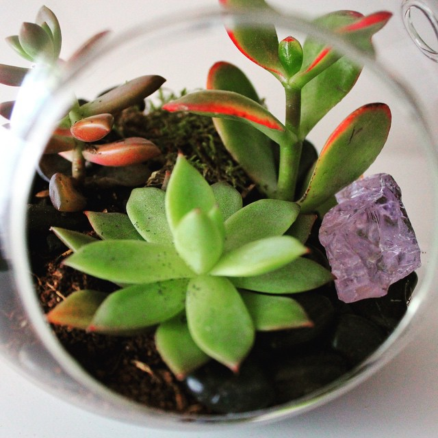 Day 12/100:  One of the best things about trying to #shoplocal is that you get to know the people you're buying from – and they get to know you!  I asked Liza from @luludilivingart in #Astoria to make this beautiful terrarium for a very special member of my family.  Succulents are really easy to take care of and amethysts are one of many crystals known for their healing energy.  Lots of love to anyone out there fighting some kind of battle🌱❤️      #astoria #astoriany #astoriaqueens #queens #queensnyc #heartofqueens #100DaysOfQueens (at Luludi Living Art)