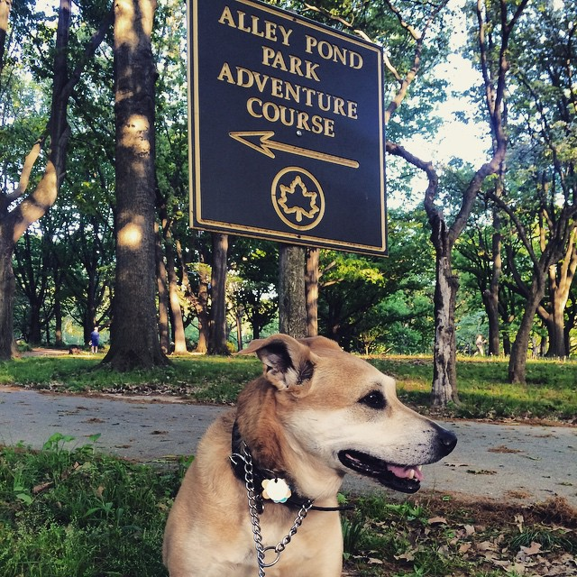 Shea is clearly ready for an adventure #AlleyPondPark via @allisongerrity #queens #heartofqueens #sheagerrity #whatamodel (at Alley Pond Park)