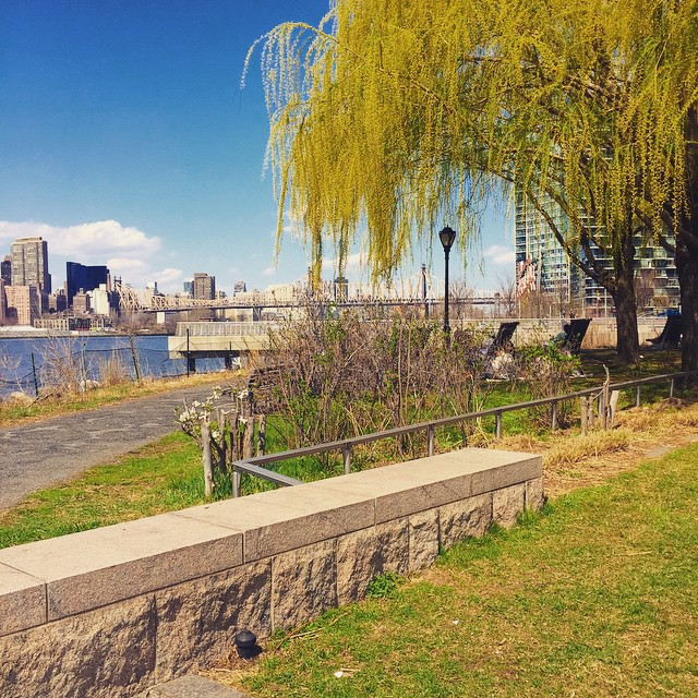 Taking it all in on this gorgeous day 💛🌳🌷 #LIC #longislandcity #gantryplazastatepark #queens #heartofqueens #queenscapes (at Gantry Plaza State Park)