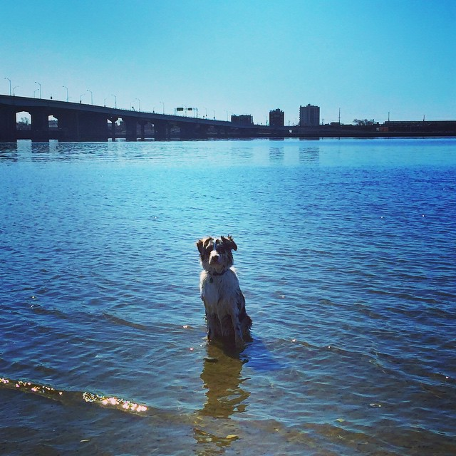Finley's ready for summer! #rockaway #rockawaybeach #queens #heartofqueens via @lizzygilly23
