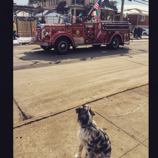 Finley enjoying his first #Rockaway St. Patty's Day parade via @lizzygilly23 #rockawaypark #rockawaybeach #queens #heartofqueens  (at Rockaway Park)