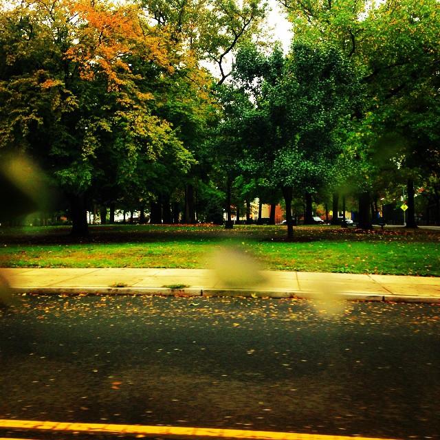 Rainy days at Juniper Valley #middlevillage #queenscapes #latergram (at Juniper Valley Park)