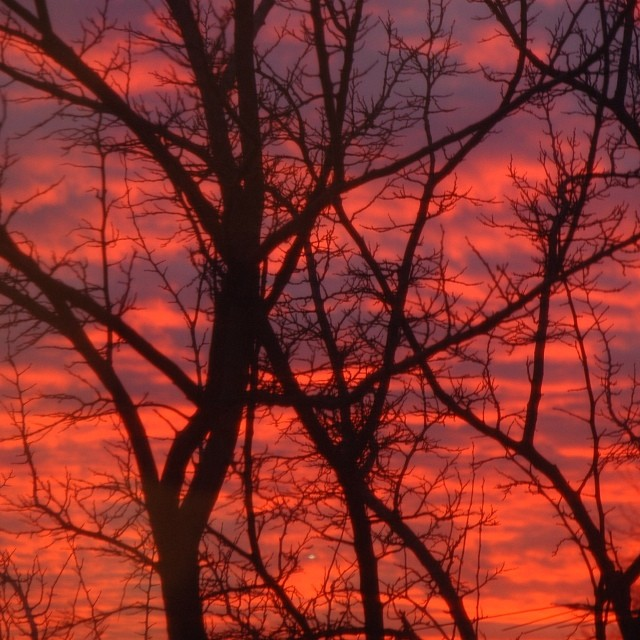 My cousin Karla's photo of a Christmas Sunset over Middle Village.