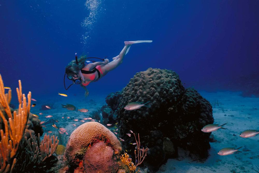 Diver Female.jpg