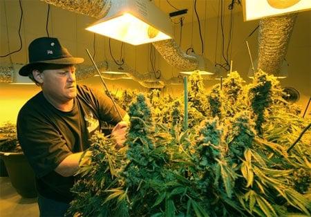 Marijuana-Growers.jpg