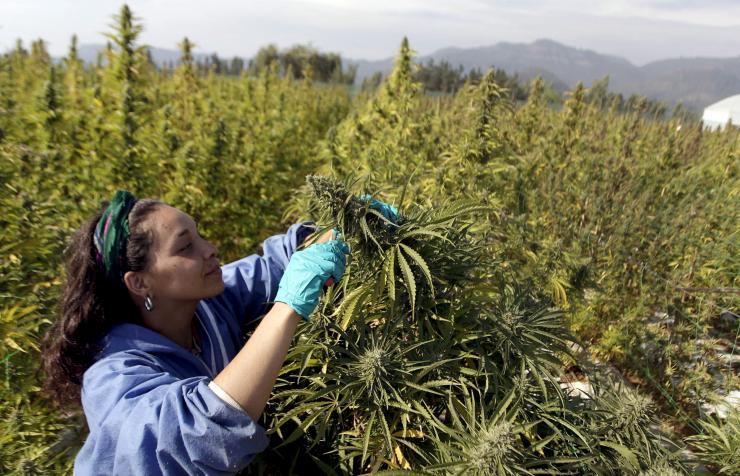 legalise-cannabis.jpg