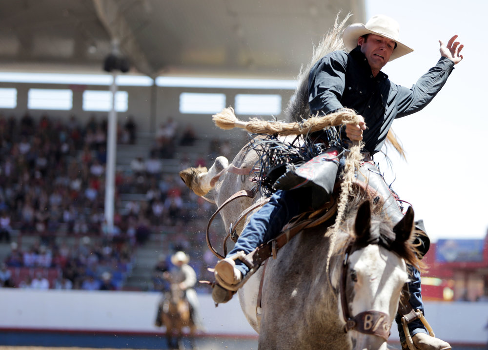Landon Mecham, holds on tight while he competes in the saddle bronc riding competition July 2017, at the Greeley, Colorado, Stampede Rodeo in the Island Grove Arena (Greeley Tribune Newspaper).