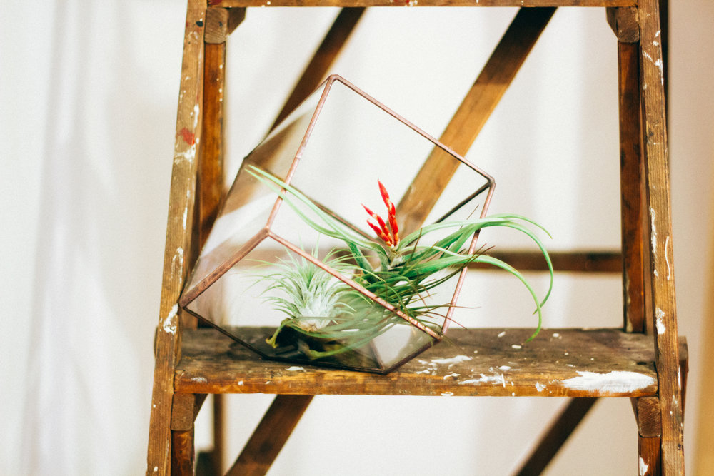 IMG Air Plant on Ladder.jpg
