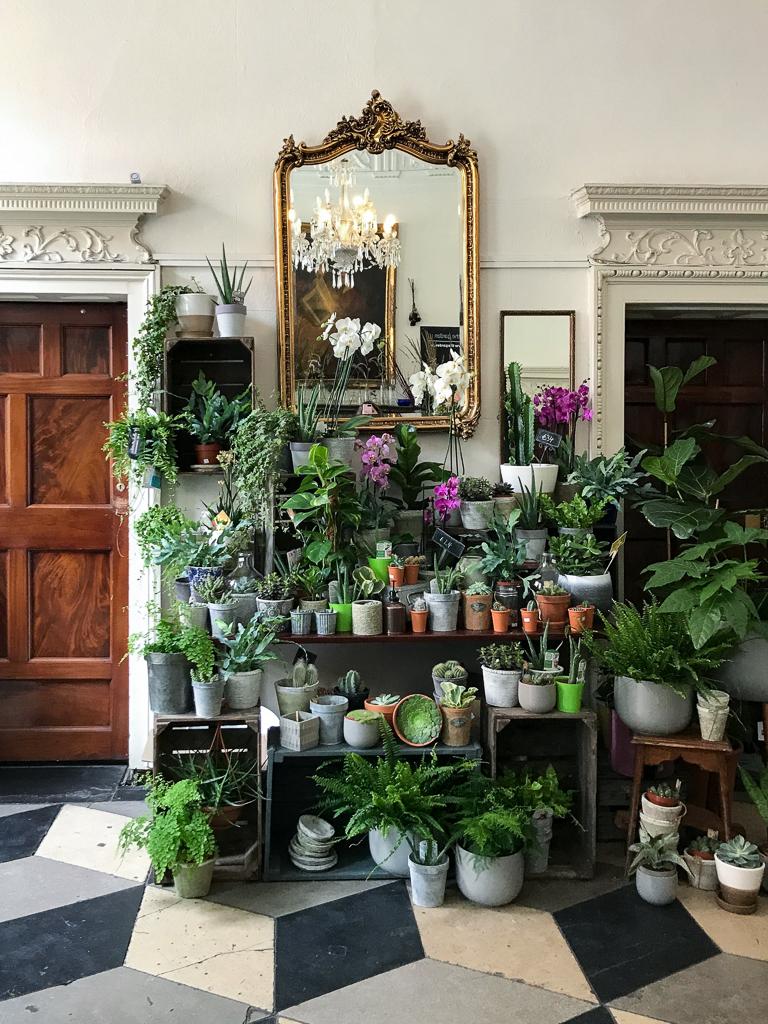 The garden, Dublin