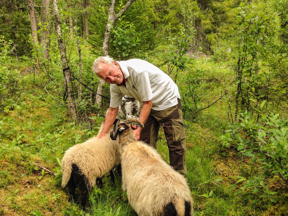 Veldig trivelig å treffe sauene våre i fjellet.