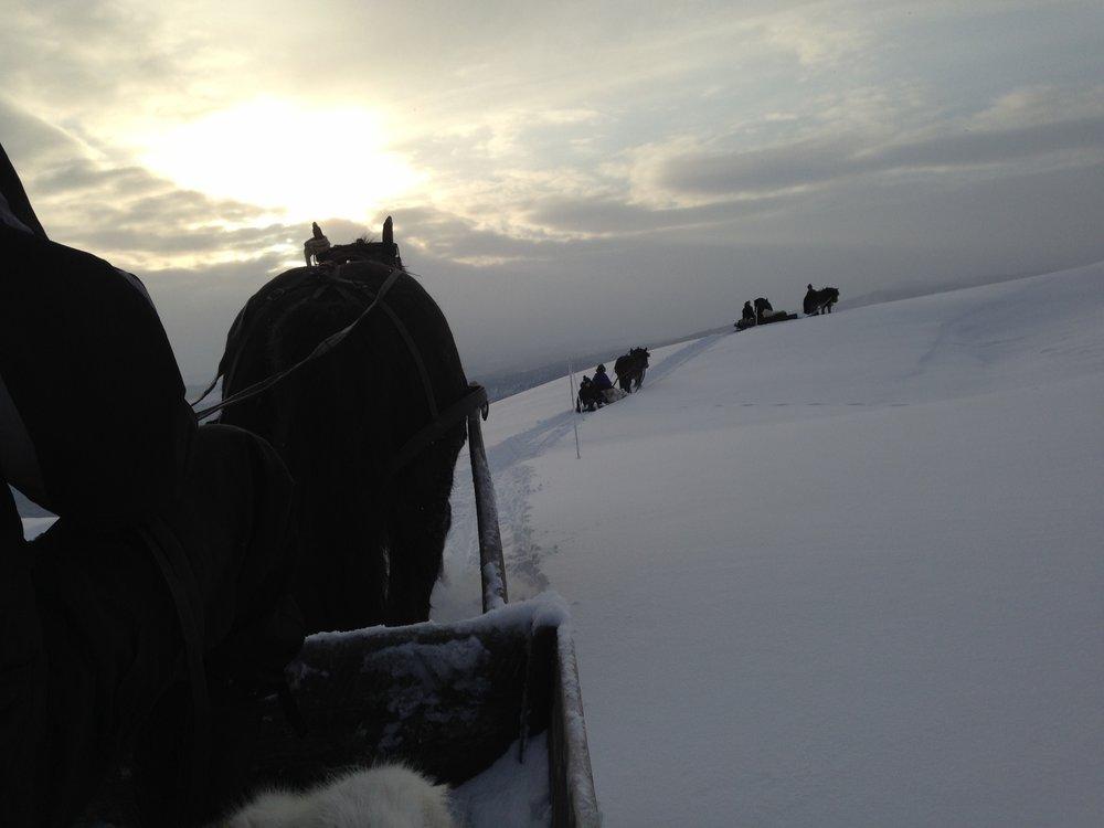 Med hest og slede til Skardfjell.