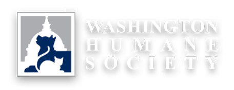 washington-human-society-bikram-yoga-rockville.png