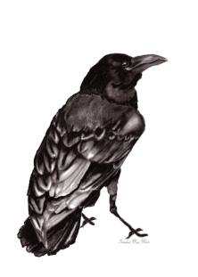 """Graphite and charcoal """"Raven""""  """"And the ravens brought him bread and flesh in the morning,and bread and flesh in the evening,and he drank of the brook"""""""