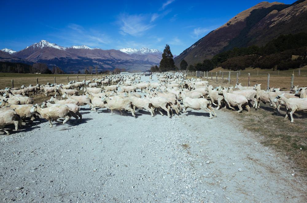 New Zealand-0012526.jpg