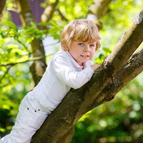 Child climbing tree happy
