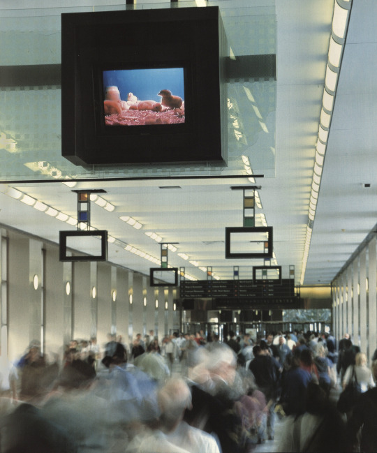 Paul Pfeiffer   Orpheus Descending  2001 Video installation. World Trade Center and  World Financial Center, April 15—June 28, 2001.