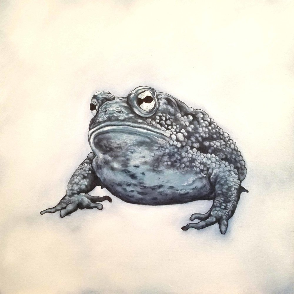 Ambush Predator , 2018, oil on canvas, 20 x 20 inches  (inquire)