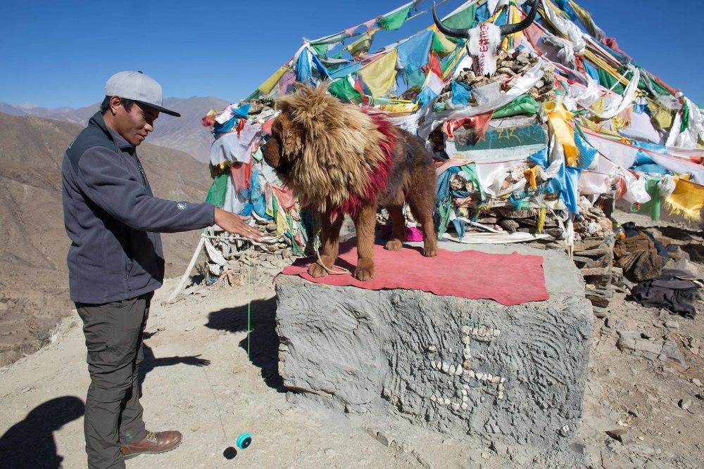 Tashi and another local, The Tibetan Mastiff