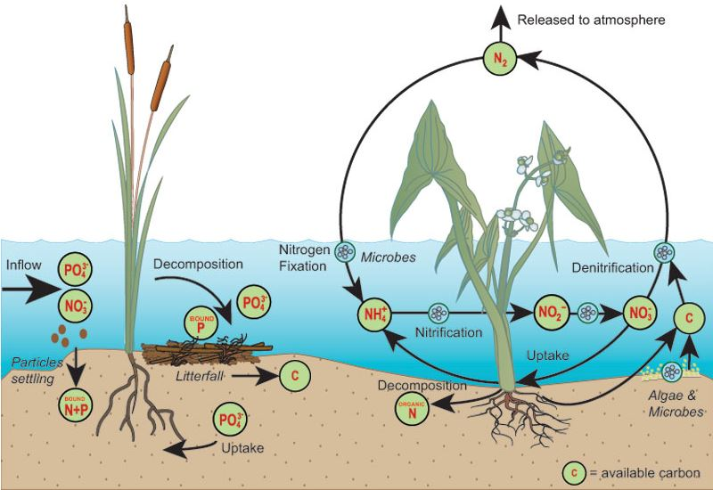 Nutrient Removal The Wetlands Initiative