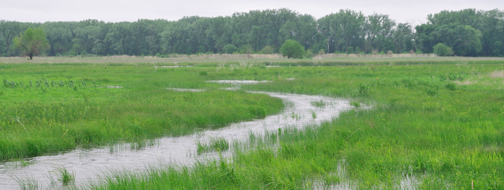 an definition and discussion of wetland 6 landholder discussion 77  wetland tender: field officer manual  the wetland tender method is specifically designed for use in wetland systems the definition.