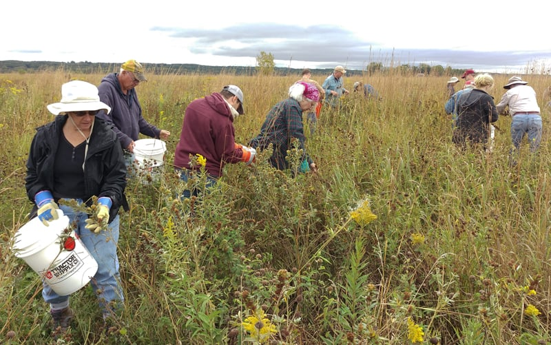 Volunteers get to work in the prairie near the Refuge's observation tower.