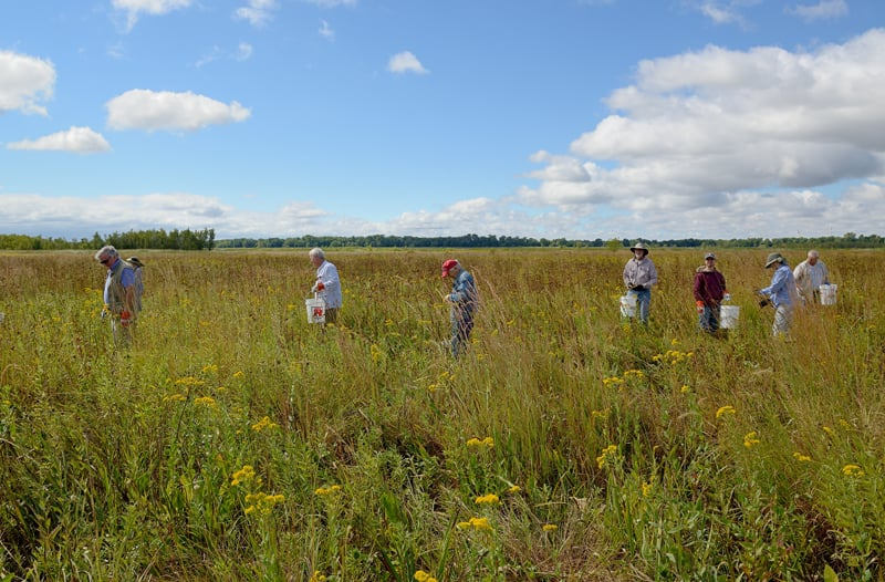 In total, volunteers harvested roughly $20,000 worth of native seed that TWI would have otherwise needed to purchase!