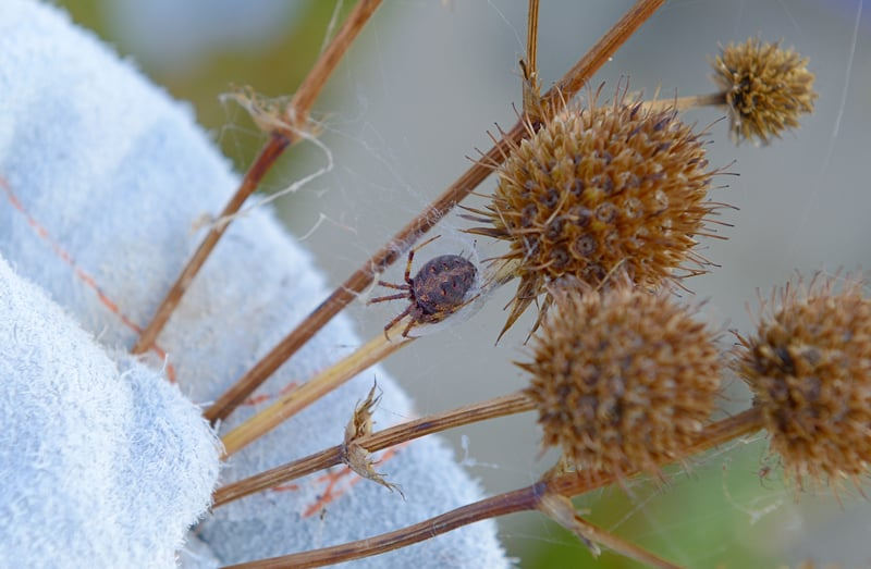 Many spiders were sheltering in the prairie vegetation or stringing webs between plants.
