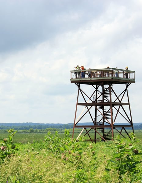 A bird survey group scans the Refuge from atop the observation tower. Photo by Beth Botts.