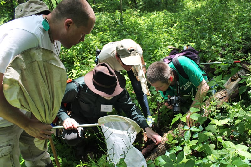 An insect group led by Field Museum entomologists searches for species under a log at Hickory Hollow, the new tract recently added to the Dixon Waterfowl Refuge. Photo by Jill Kostel/TWI.