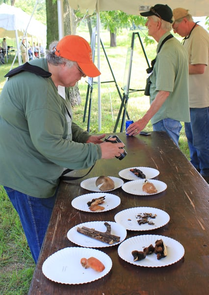 Don't eat this: Mycologists brought several colorful fungus specimens back to display at the BioBlitz base camp. Photo by Beth Botts.