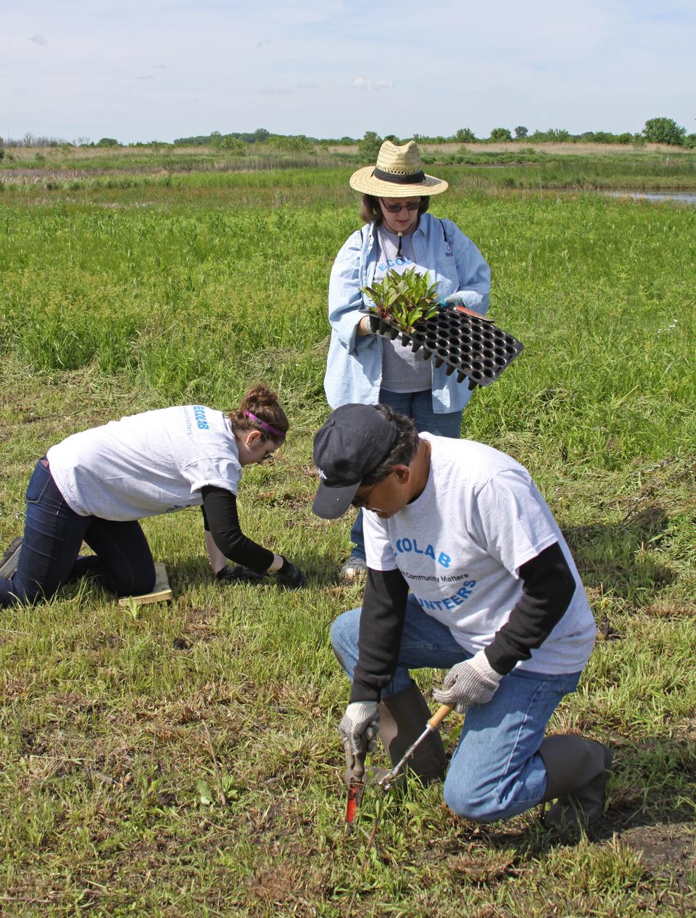 M - Ecolab team planting.jpg
