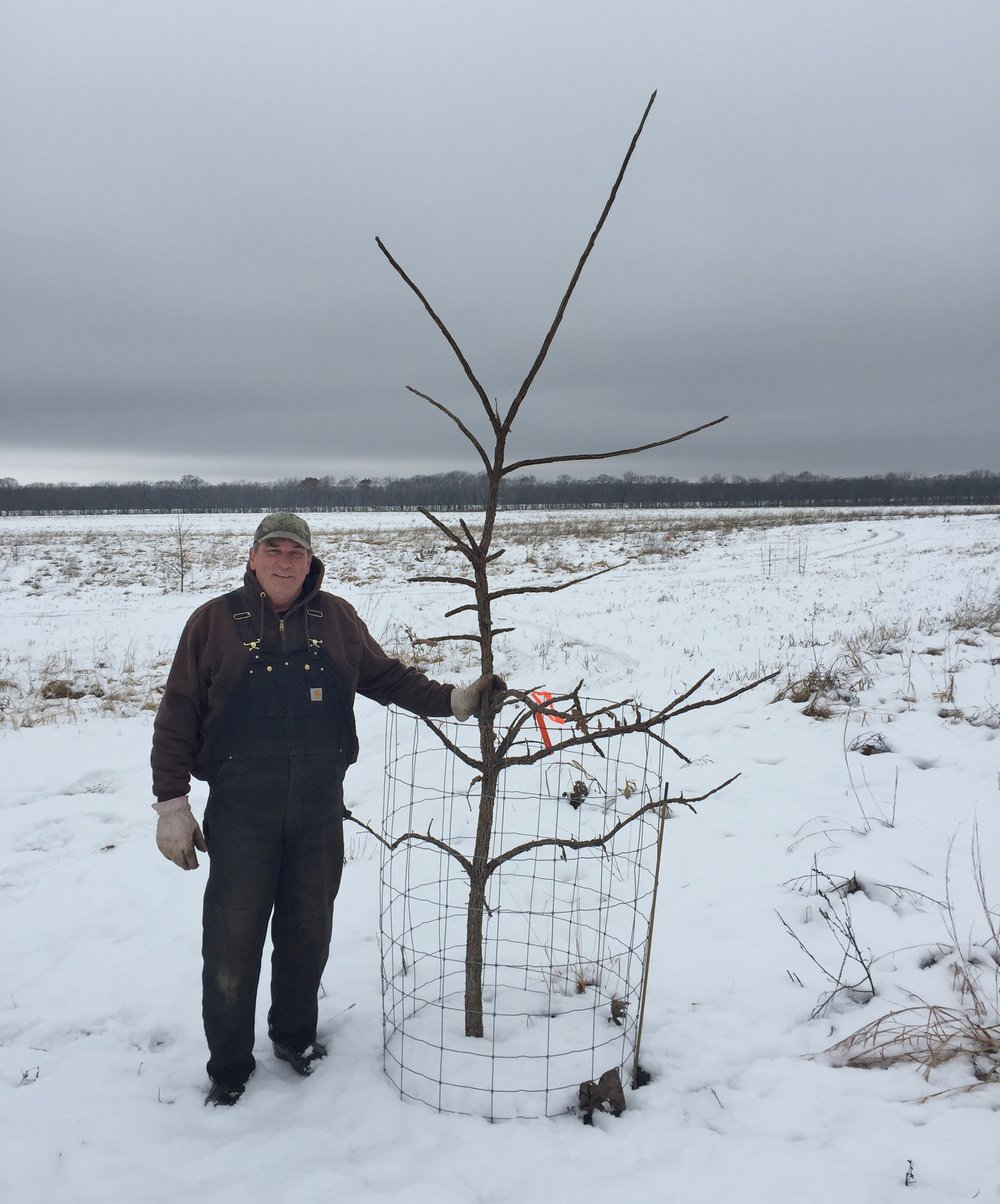 Dixon Refuge Site Manager Rick Seibert with a bur oak sapling at Hickory Hollow. Photo by Gary Sullivan/TWI.
