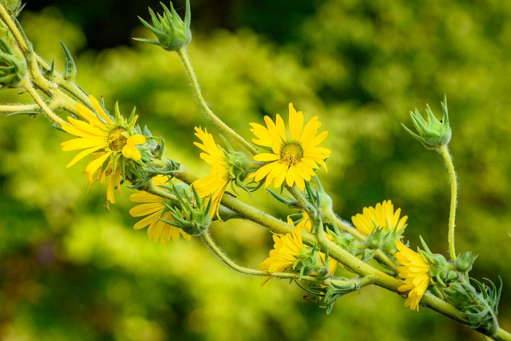 Plants (413) -