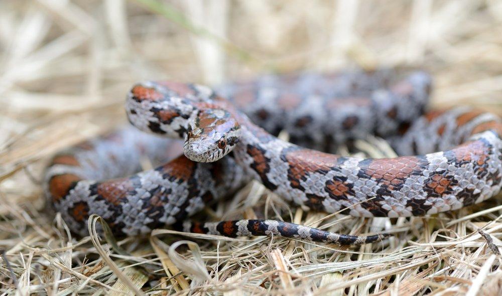 Reptiles & Amphibians (18) -