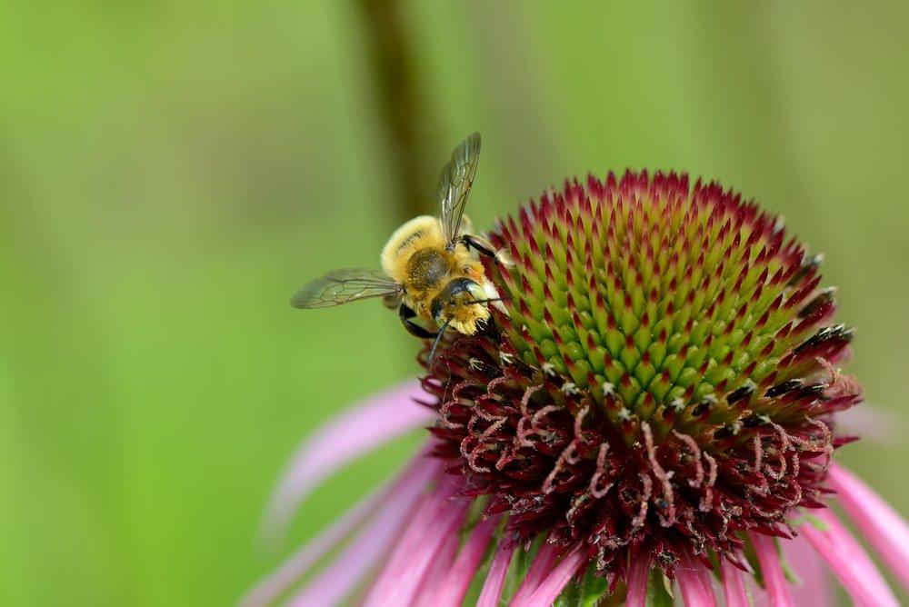 Bees & Wasps (12) -