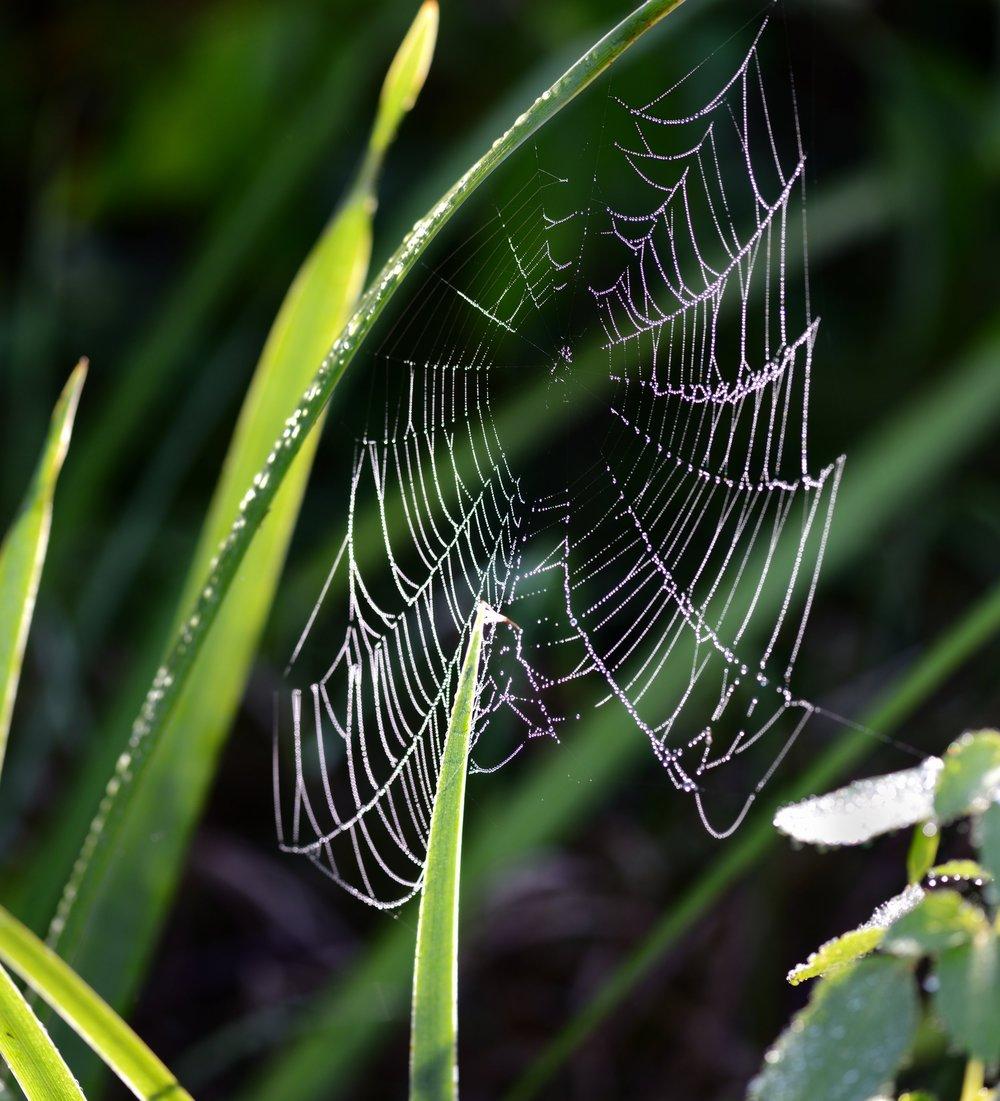 Spiders & Mites (8) -