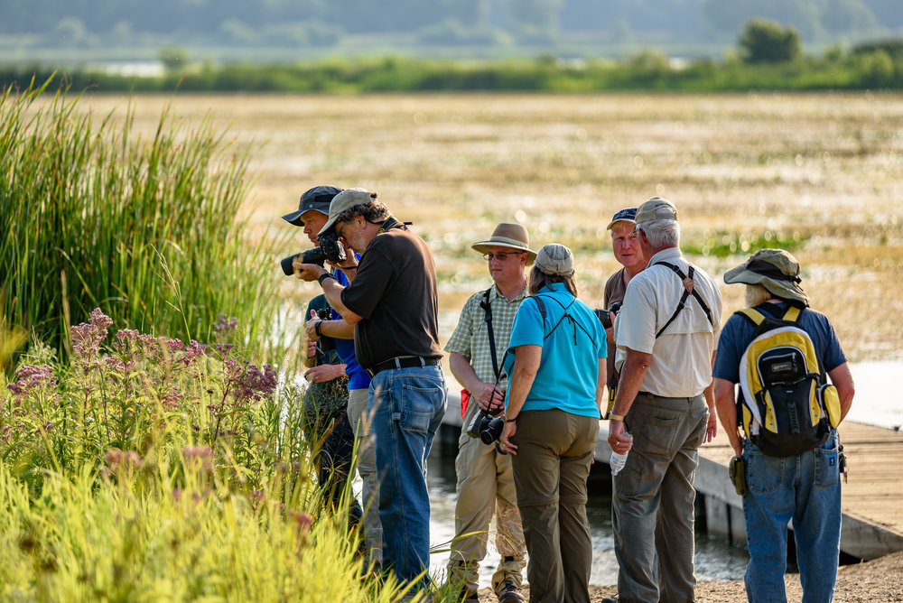 The BioBlitz began with a buzz as Terry Miesle, volunteer bee expert, found a federally endangered rusty-patched bumblebee next to the boat launch within 10 minutes of the event start. A crowd gathered around! Photo by Rafi Wilkinson.