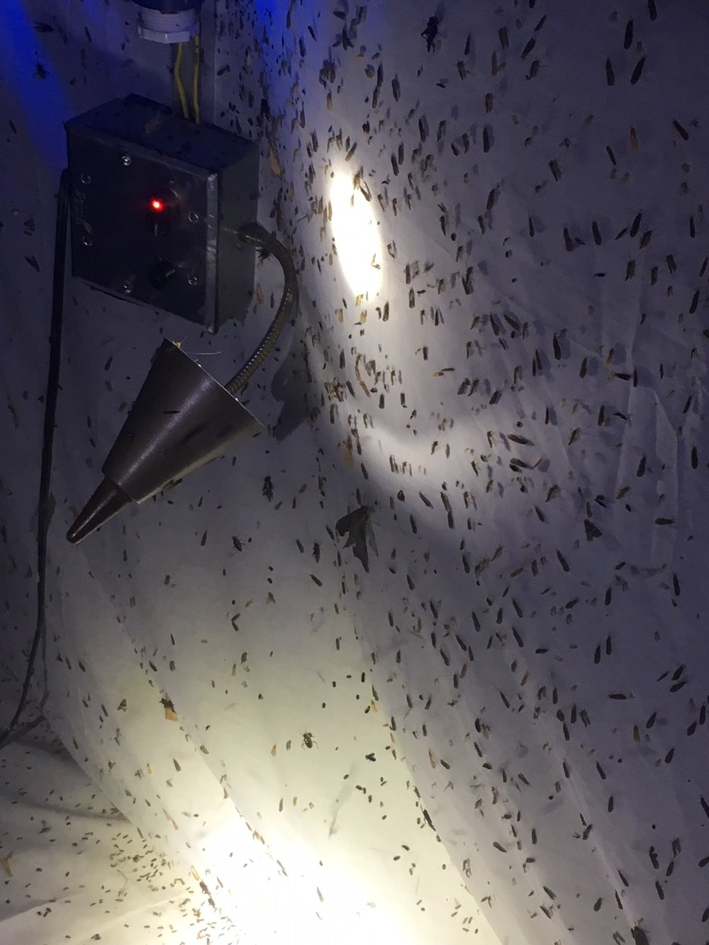 A close view of the thousands of insects gathered on the sheet at a Field Museum light trap. In total, 141 moth species alone have been identified from the BioBlitz so far. Photo by Vera Leopold/TWI.