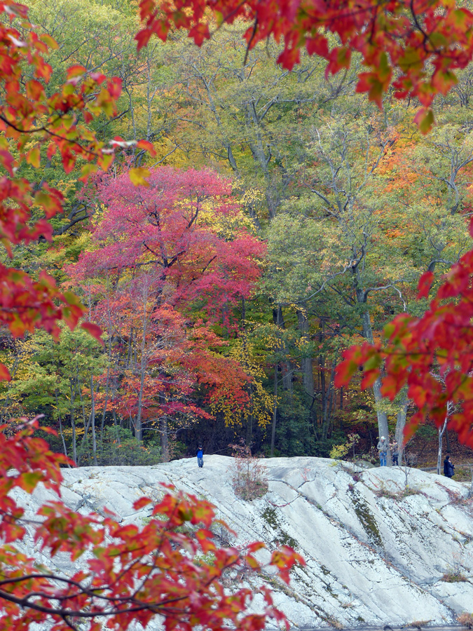 trees.rock.jpg