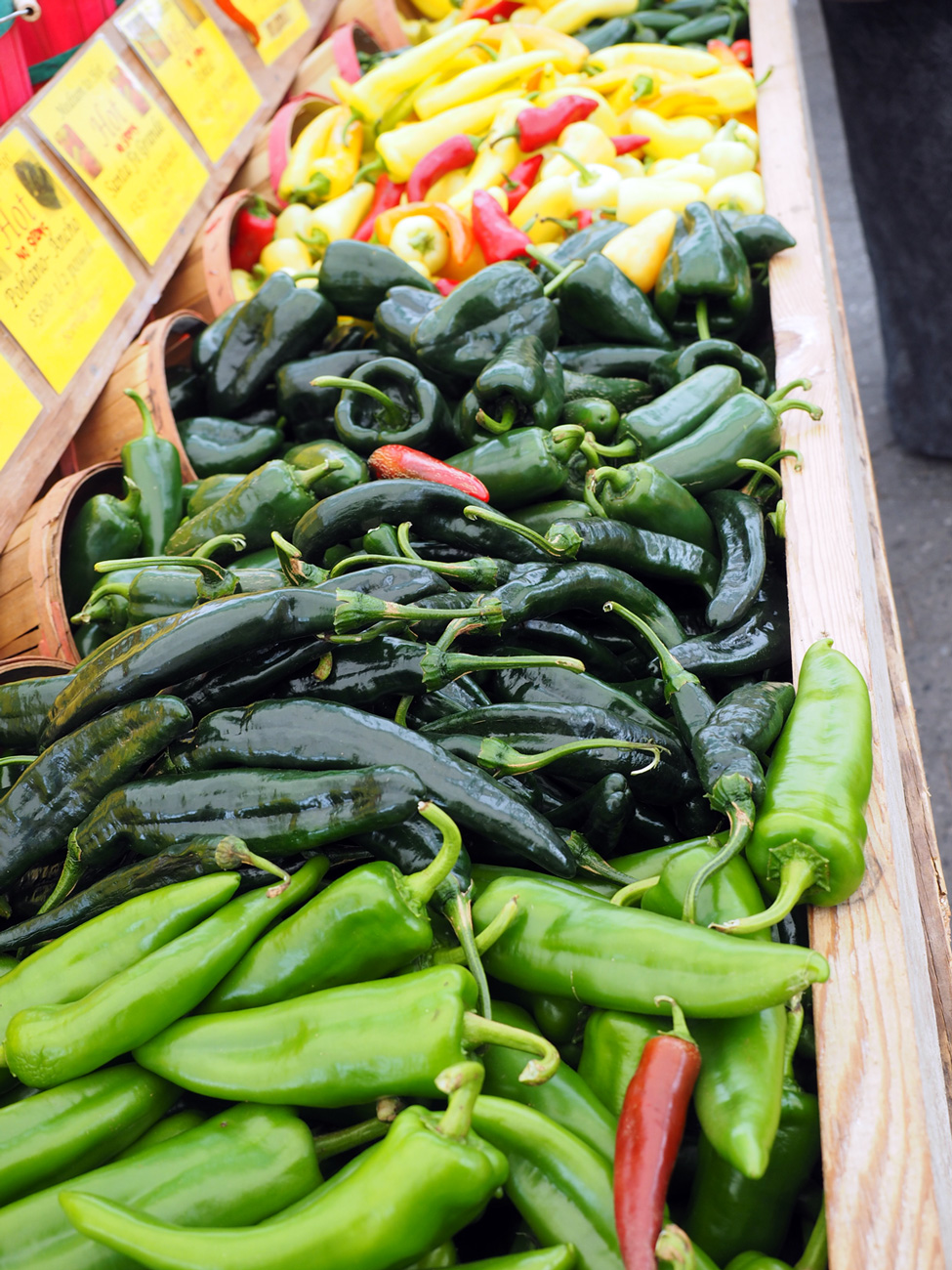 A length of peppers from which to choose at the  Union Square Market in NYC